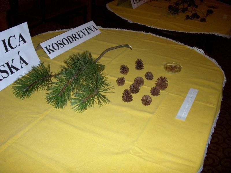 Výstava Fragmenty z prírody IX.