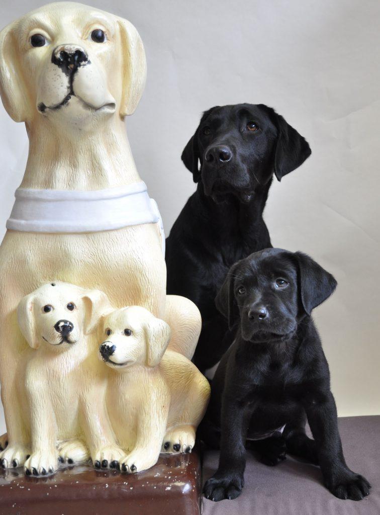 Pokladnička zbierky Štvornohé oči, čo je maketa labradorky s dvomi šteniatkami vo svetlej farbe a pri nich sedí skutočný vodiaci pes s jedným šteniatkom v čiernej farbe.