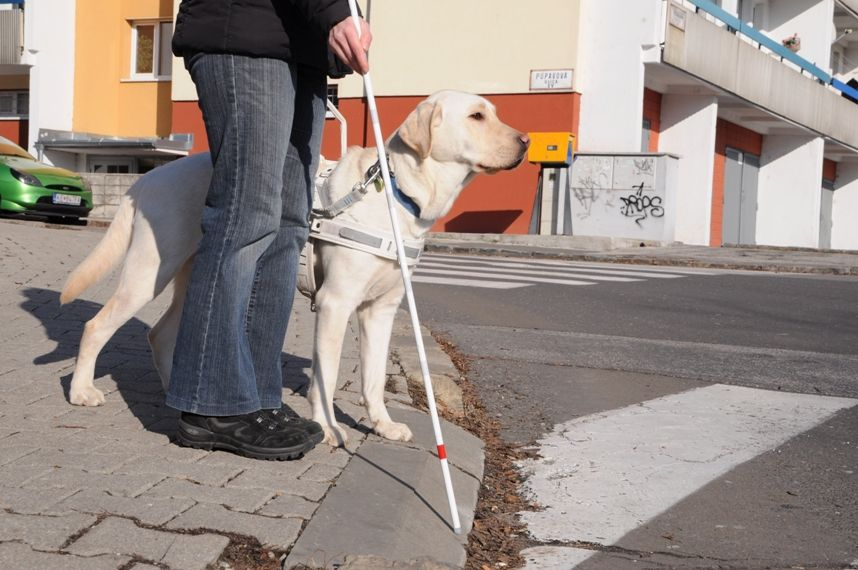 Záber na vodiaceho psa pri svojom pánovi, ktorému vidno len nohy a bielu palicu, ako spoločne čakajú pred priechodom pre chodcov.